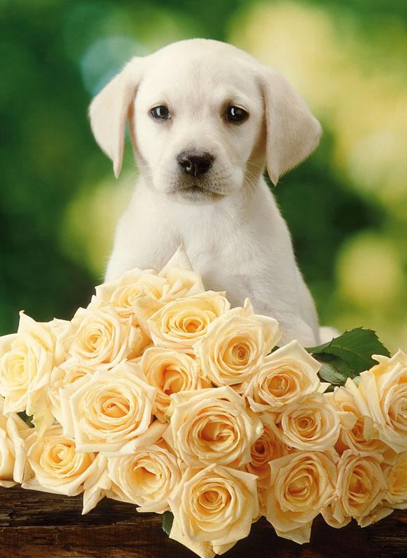 скажешь правду открытки животные с цветами всем